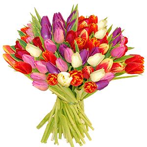 Blumenstrauss Blumenstrauß bunte Tulpen