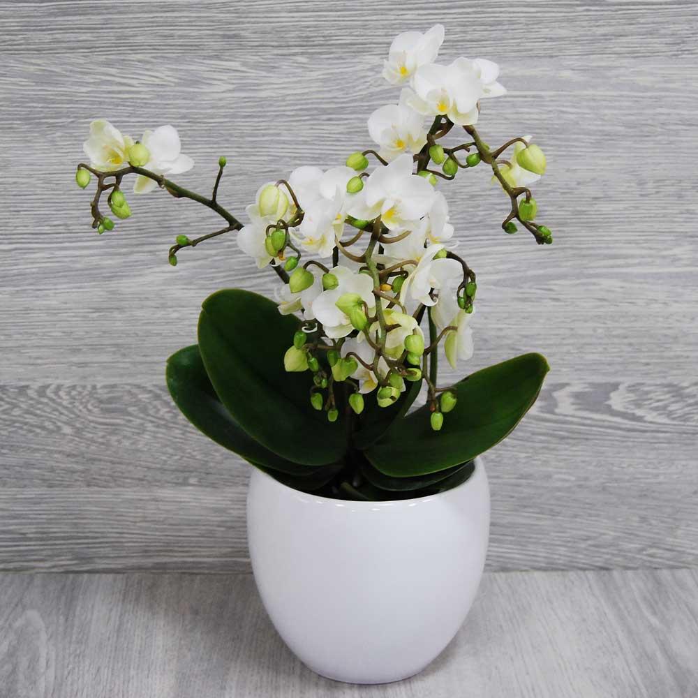 Blumenstrauss Wild Orchidee