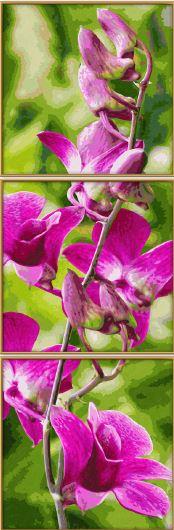 Malen nach Zahlen - Orchideenrispe