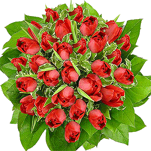 Blumenstrauss Blumenstrauß rote Tulpen